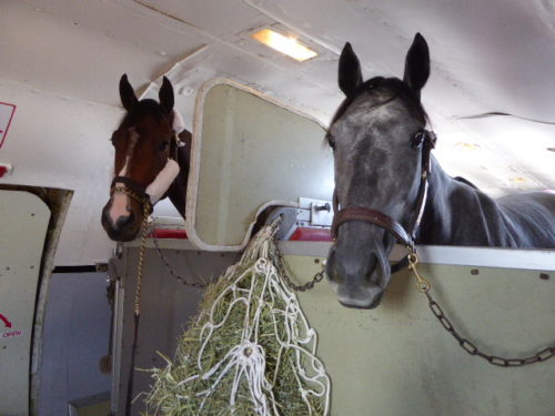 horses-flying-on-air-horse-one-in-october-2016-munched-on-hay-during-their-trip-photo_harriet-baskas
