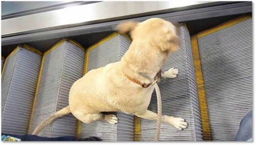 Tampa Int'l latest airport to tighten leash on pets